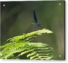 Blue Dragon Acrylic Print by Al Cash