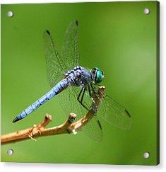 Blue Dragonfly Start Up Acrylic Print by Meeli Sonn