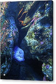 Blue Eel And Shy Friend Acrylic Print
