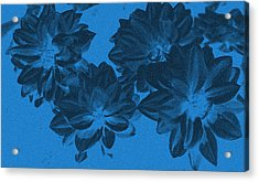 Blue Flower Art Acrylic Print by Aimee L Maher Photography and Art Visit ALMGallerydotcom