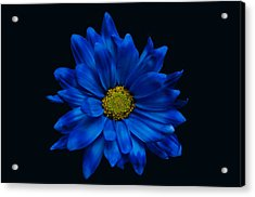 Blue Flower Acrylic Print by Ron Smith