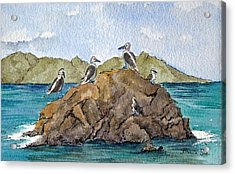 Blue Footed Boobies In Galapagos Acrylic Print by Bonnie Sue Schwartz