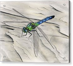 Blue-green Dragonfly Acrylic Print