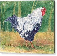 Blue Hen  Acrylic Print