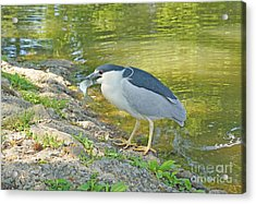 Blue Heron With Fish Acrylic Print by J Jaiam