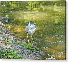 Blue Heron With Fish One Acrylic Print by J Jaiam