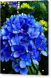 Blue Hydrangea Abstract Acrylic Print by Cindy Wright