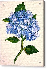 Blue Hydrangea Acrylic Print