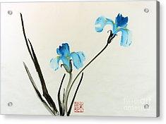 blue iris II Acrylic Print