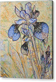 Acrylic Print featuring the painting Blue Iris  by Richard James Digance