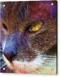 Blue Kitty Acrylic Print by Rachel Hames