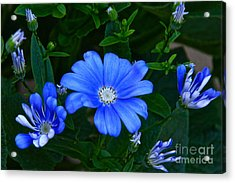 Blue Magic Acrylic Print by Byron Varvarigos