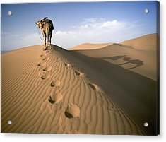 Blue Man Tribe Of Saharan Traders With Acrylic Print by Axiom Photographic