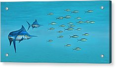 Blue Marlin And Yellowfin Tuna Acrylic Print by Walter Colvin