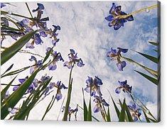 Blue Acrylic Print by Micael  Carlsson