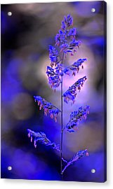 Blue Mood Acrylic Print