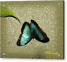 Acrylic Print featuring the photograph Blue Morpho 1 by Margaret Buchanan