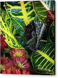 Acrylic Print featuring the photograph Blue Morpho Butterfly by Margaret Buchanan
