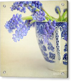 Blue Muscari Flowers In Blue And White China Cup Acrylic Print by Lyn Randle