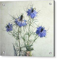 Blue Nigella Sativa Flowers Acrylic Print by By Julie Mcinnes