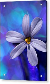 Blue On Blue Acrylic Print
