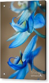 Blue Orchid  Acrylic Print by Melissa Haley