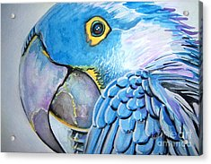 Blue Parrot Acrylic Print by Ken Huber
