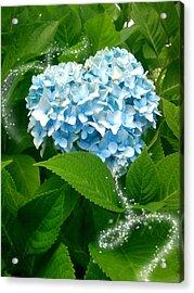 Blue Pom Flower Acrylic Print by Lee Yang