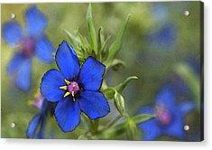 Blue Royalty Acrylic Print by Beverly Hanson