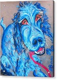 Blue Setter Acrylic Print