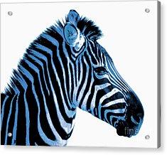Blue Zebra Art Acrylic Print