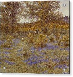 Bluebell Copse Acrylic Print by Helen Allingham