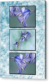 Acrylic Print featuring the photograph Bluebell Triptych by Steve Purnell
