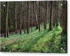 Bluebell Woods Acrylic Print by Julie L Hoddinott