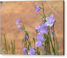 Bluebells And Red Rock Acrylic Print
