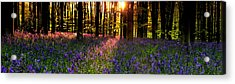 Acrylic Print featuring the photograph Bluebells In Morning Sun  by John Chivers