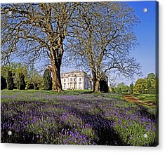 Bluebells In The Pleasure Grounds, Emo Acrylic Print by The Irish Image Collection