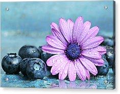 Blueberries And Daisy Acrylic Print by Sandra Cunningham