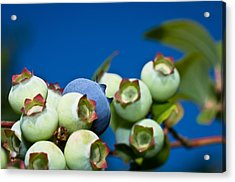 Blueberries And Sky Acrylic Print