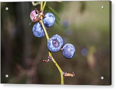 Acrylic Print featuring the photograph Blueberry by Ester  Rogers