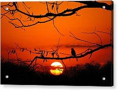 Bluebird Dawn Acrylic Print