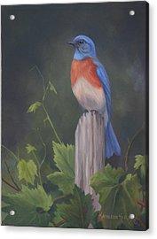 Bluebird Acrylic Print by Kathleen  Hill