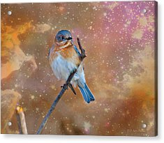 Bluebird Perched In Space Acrylic Print by J Larry Walker