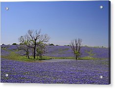Bluebonnet Acres Acrylic Print by Lynnette Johns