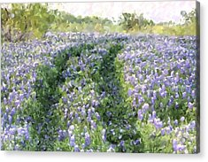 Acrylic Print featuring the photograph Bluebonnet Trail by Donna  Smith