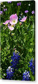 Acrylic Print featuring the photograph Bluebonnets And Buttercups by Lynnette Johns