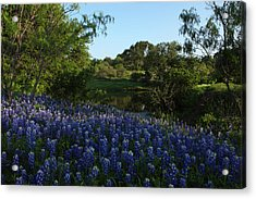 Bluebonnets At The Pond Acrylic Print