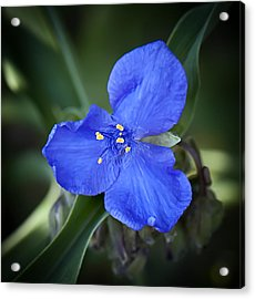 Bluegreen Acrylic Print by Michael Putnam