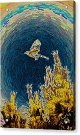 Bluejay Gone Wild Acrylic Print by Trish Tritz