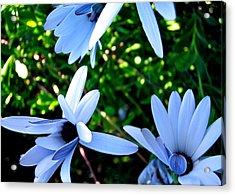 Bluey Twinkles Acrylic Print by HweeYen Ong